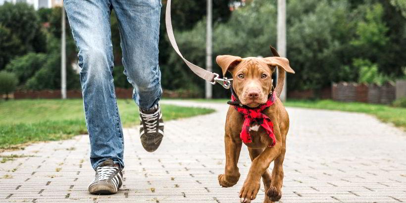 Doggie Daycare in Mobile, Alabama