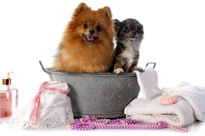 Pet Bathing Service